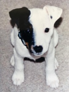 Jesse Puppy